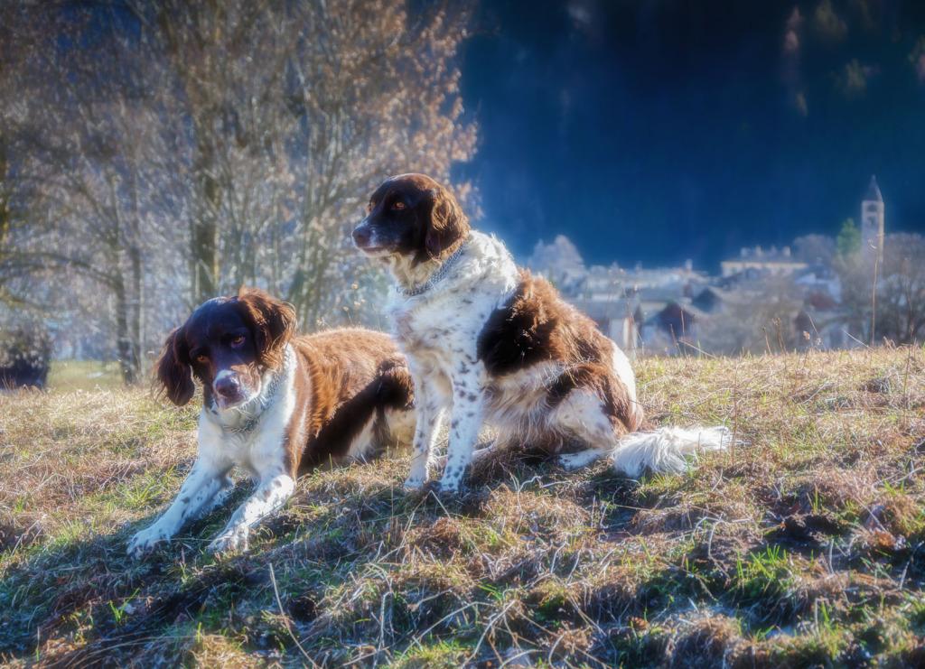 unsere Hunde (1 von 1)